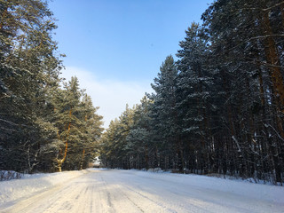 Fabulous Russian winter pine forest in the freezing weather
