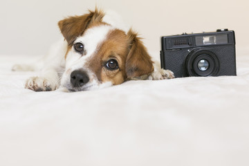 closeup portrait of a cute small dog sitting on bed with a black vintage camera. Pets indoors