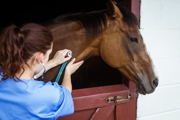 Veterinarian examining horse in a stable