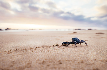 Funny Crab Arthropod looks on sunrise in the early morning time.