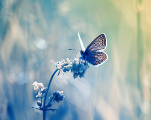 cute little blue butterfly, copper-butterfly sits on a delicate and beautiful meadow