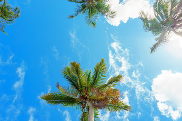 the tops of the palm trees against the clear blue sky