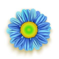 Blue Daisy Flower isolated on white. Vector illustration
