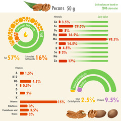 Infographic of pecan nutritional value / Infographic illustration of pecan nutritional value with values of fat, protein, carbohydrate, minerals and vitamins
