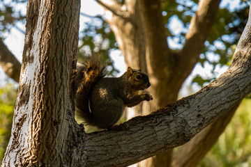 Squirrel sitting in tree with leaves and trees in background