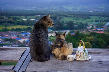 cats and tea with a view