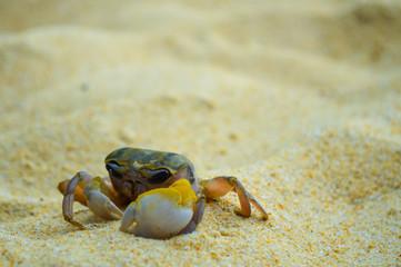 Closeup sad crab on beach