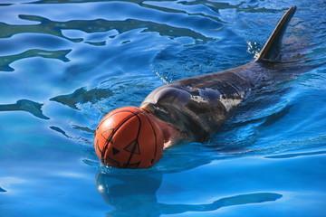 ハロウィーン的な顔が描かれたバスケットボールを押しながら泳ぐイルカ