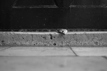 Dead Fish on Doorstep in Dubrovnik, Croatia