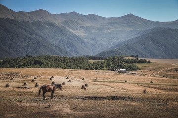 Horses in mountain under the blue sky