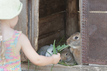 Cute blonde girl feeding domestic rabbits with organic grass