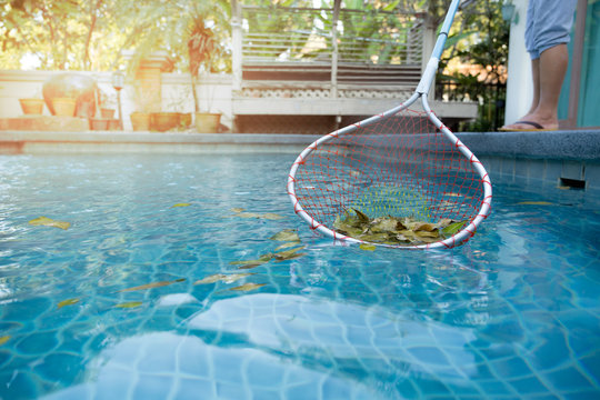 Woman cleaning swimming pool of fallen leaves with net