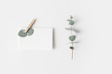 flat lay with eucalyptus and blank paper on white surface