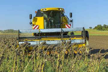 Sunflower harvesting in Lower Austria