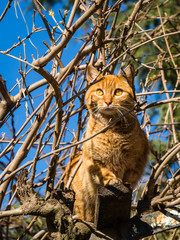 Orange cat climbing a tree with a curious look on his face