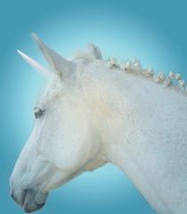 Primo piano di un bianco cavallo con un candido unicorno  su uno sfondo celeste