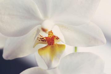 Orchid beautiful flower close up macro
