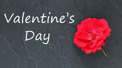 Valentine's Day and red rose