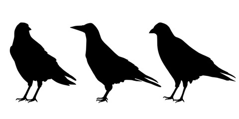 Set of three realistic silhouettes sitting ravens