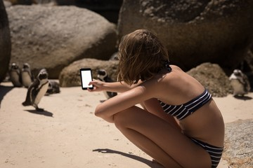 Teenage girl taking picture of penguins with mobile phone