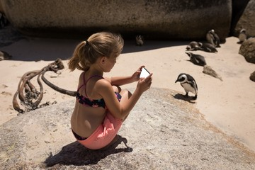 Girl taking picture of penguins with mobile phone