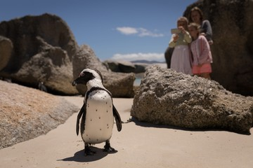 Siblings taking picture of penguin at beach