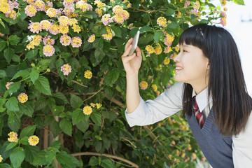 女子高生 スマートフォン 花 撮影