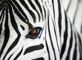 Nahaufnahme des Gesichts eines Zebras