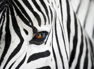 Photo sur Plexiglas Zebra Nahaufnahme des Gesichts eines Zebras