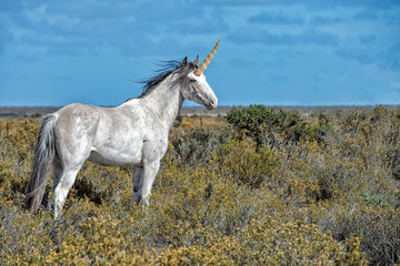 Unicorn white horse