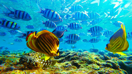 many different fish, underwater marine world