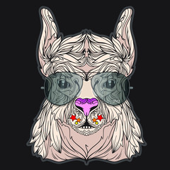 Vector face of lama with aviator eyeglasses. Isolated on black background. Line art style.