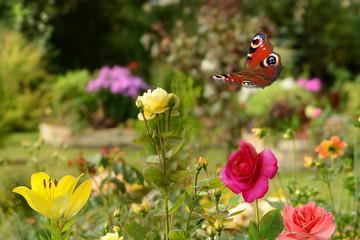 Schmetterling 417