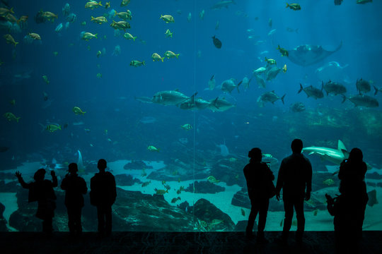 Silhouette of crowds observing fish at Georgia Aquarium.