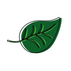 leaf icon image