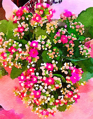 Nice Kalanchoe on paper Watercolor