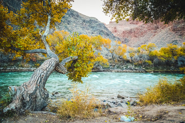 Scenic view inside Charyn canyon. Beautiful tree and river