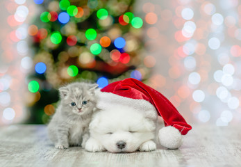 Kitten and white fluffy samoyed puppy in red santa hat  on a background of the Christmas tree