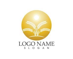 Rice wheat icon sign logo