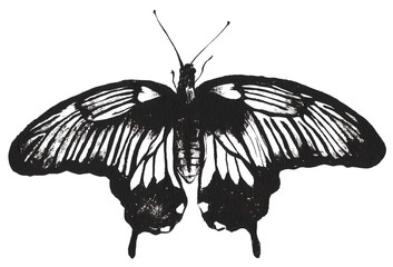 Butterfly vintage authentic hand drawn ink brush black illustration