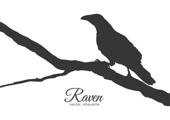 Silhouette of Raven sitting on a dry branch.