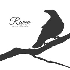 Silhouette of Raven sitting on a dry branch isolated on white background.