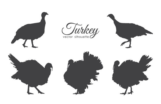 Set of turkeys silhouette isolated on white background.