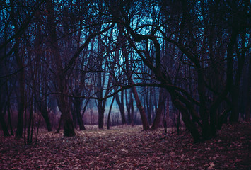 Fantasy magical forest. Stranger winding branches of trees in the mist. Background mysterious atmosphere