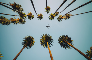 Fotorolgordijn Palm boom View of palm trees, sky and aircraft flying