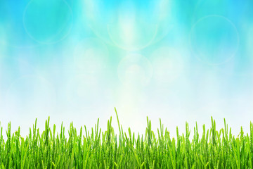 Fototapete - Spring or summer abstract background with green grass with drops of dew and bokeh lights