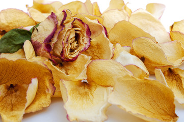 Dried rose and dried rose petals
