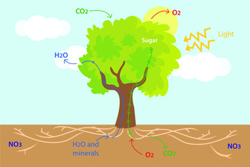 Vector illustration of the structure and numerous processes in trees. Colourful plant biology picture.