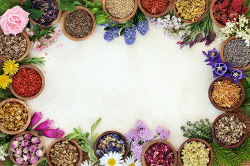 Medicinal herb and flower border with fresh and dried herbs and flowers used in natural herbal medicine and homoeopathic remedies on parchment paper background.
