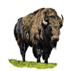Buffalo standing in the grass, sketch vector graphics color picture